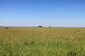 Photo of Sherman County Grass Stratford, TX 79084