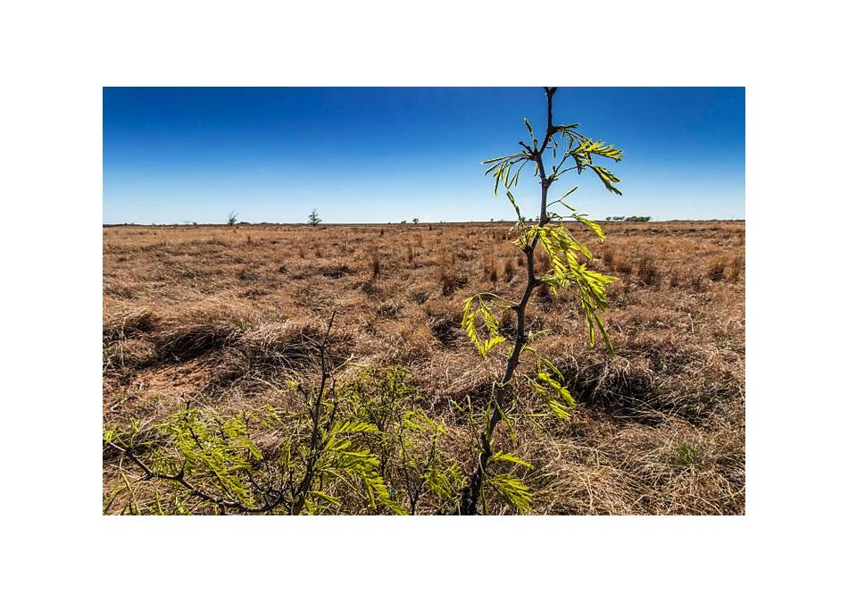 Photo of Lone Tree 240 Other - Not In List, TX 79124