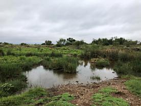 Photo of Rattan Ranch Matador, TX 79244