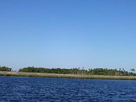 Photo of . Dan May Private Island Undetermined-suwannee, FL 32692