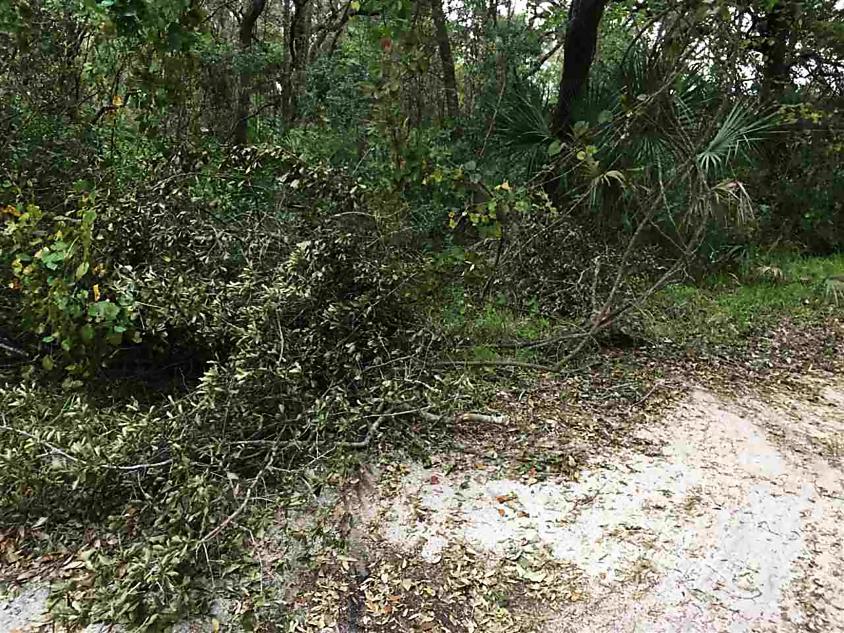 Photo of 1093 Collier Blvd St Augustine, FL 32084