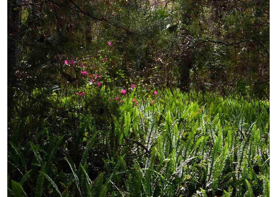 Photo of 2411 Deer Run St Augustine, FL 32084