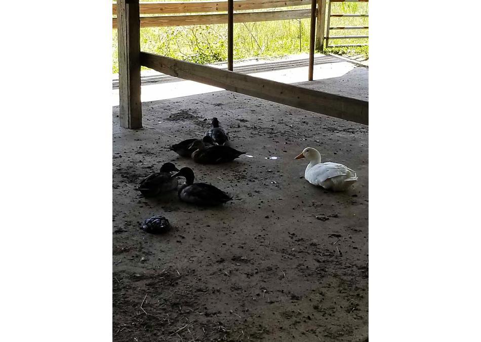 Photo of 1790 Poa Boy Farms Road St Augustine, FL 32092