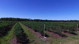Photo of 10434 Se 225th Dr Hawthorne, FL 32640