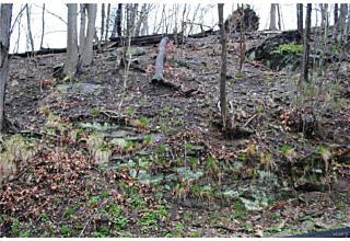 Photo of Ridge Road Ardsley, NY 10502