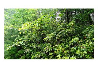 Photo of 0  South French Clearing Forestburgh, NY 12777